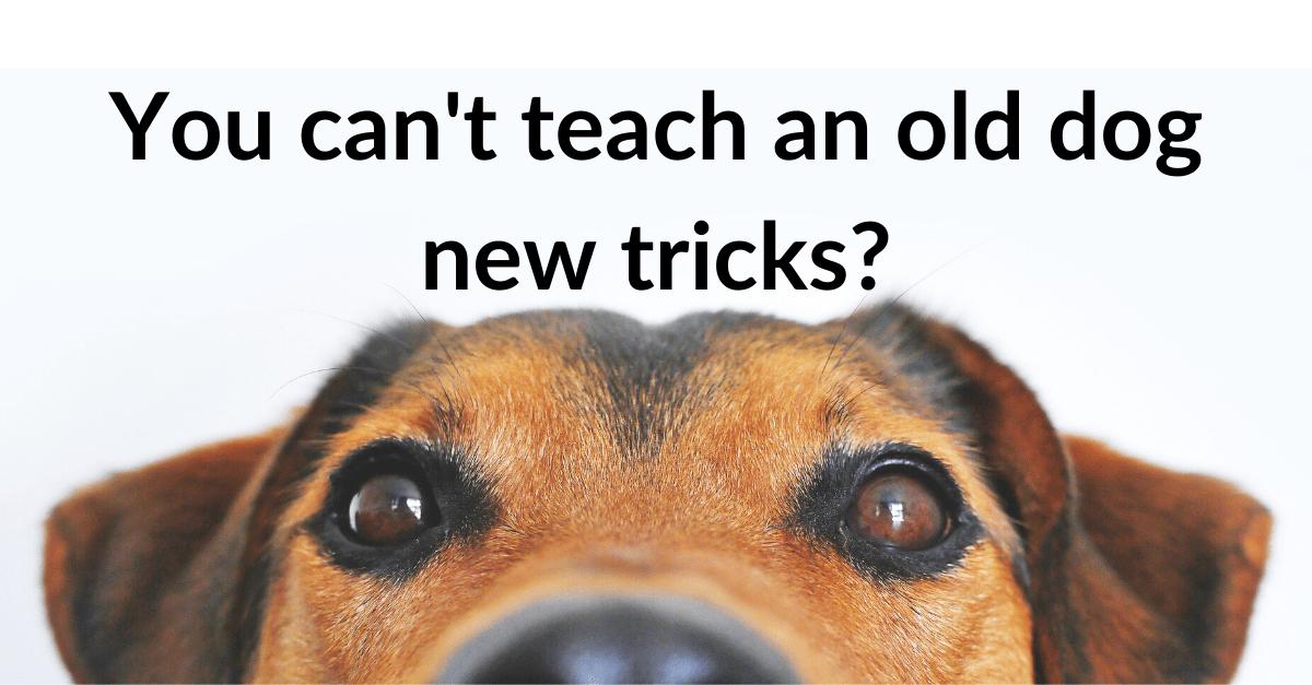 Zdjęcia psa z napisem: nie nauczysz starego psa nowych sztuczek